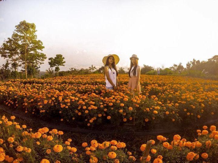 Ladang Bunga Marigold - Enam Tempat Wisata Gratis di Bali Anti Mainstream - keliling asia